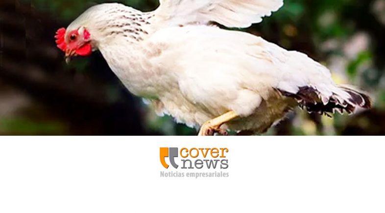 Carrefour Argentina adopta la política de huevos libres de jaulas